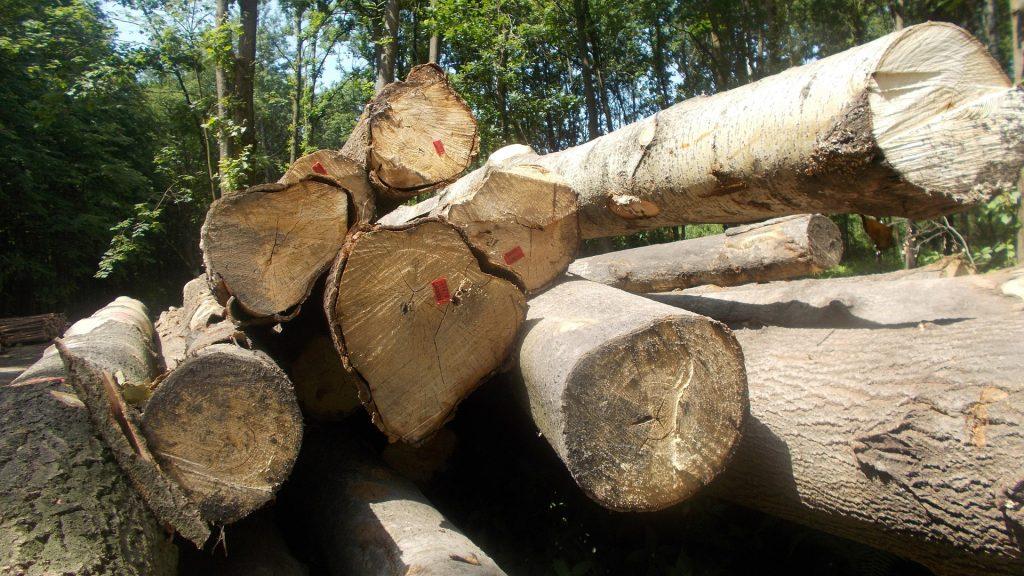 Wycinka drzew Bytom